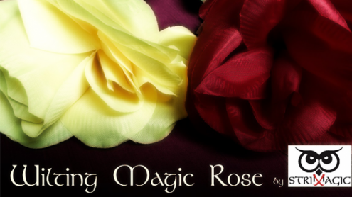 Wilting Rose by Strixmagic - Trick