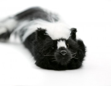 Original Sammy The Skunk - Spring Animal