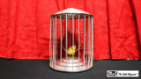 Spring Production Birdcage by Mr. Magic - Trick